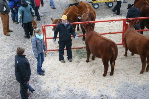 Emmet and his friend Emma getting ready for the Mile High Sale at the National Western Stockshow