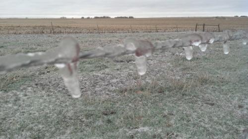 A frozen fence line.