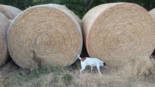 Big round bales will be ground and blended with other hay to make the perfect ration for cows during calving season.